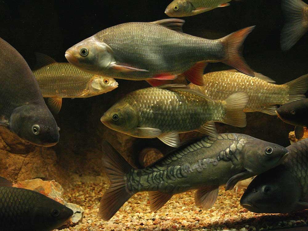 Maison Pêche Nature